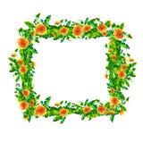 El diente de león de la primavera de la acuarela florece, florece marco cuadrado aislado en el fondo blanco Imagen de archivo libre de regalías