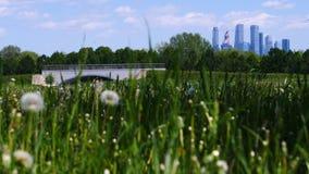 El diente de león del claro disolvió a principios de verano la visión desde el parque a los rascacielos almacen de video