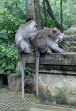 El dinero adulto prepara otro mono adulto fotos de archivo