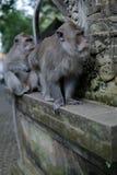El dinero adulto prepara otro mono adulto fotos de archivo libres de regalías