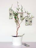El dinero crece en árboles Fotos de archivo