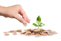 El dinero y la planta con la mano financian nuevo negocio imágenes de archivo libres de regalías