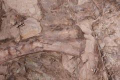 El dinosaurio aterrorizado permanece en los parques de la montaña Foto de archivo
