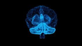 el diseño de la animación 3d de cerebro humano y el tronco del encéfalo en fondo alfa con mri exploran en concepto de la creativi ilustración del vector