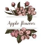 El diseño dibujado mano con la manzana florece bosquejo altamente detallado libre illustration