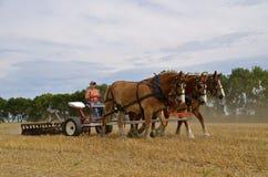 El disking de antaño de un campo con los caballos Fotografía de archivo