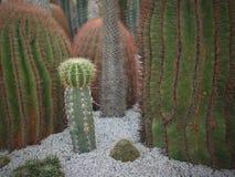 El diverso árbol del cactus en el jardín fotografía de archivo