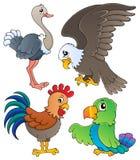 El diverso tema de los pájaros fijó 1 Imagenes de archivo
