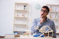 El doctor del estudiante que estudia el esqueleto animal Imágenes de archivo libres de regalías