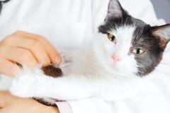 El doctor escucha un gato fotografía de archivo libre de regalías
