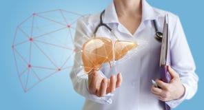 El doctor muestra el hígado humano Foto de archivo libre de regalías
