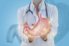 El doctor muestra que el estómago está dibujado imagen de archivo libre de regalías