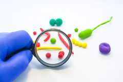 El doctor o el científico examina a través del modelo agrandado lupa de las bacterias, organismos unicelulares, cocos, los vibrio imagen de archivo libre de regalías