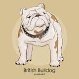 El dogo de la raza del perro se está colocando en un fondo beige Fotografía de archivo libre de regalías
