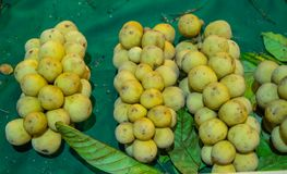 El domesticum o Longkong de Lansium es las frutas tropicales tailandesas foto de archivo libre de regalías