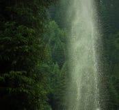 El donde la naturaleza gobierna Imagen de archivo