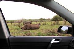 El dormir africano del rinoceronte del safari Fotografía de archivo
