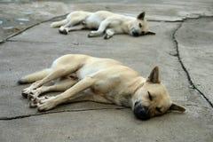 El dormir blanco y marrón del perro Fotografía de archivo