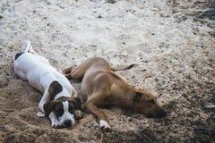 El dormir de dos perros Foto de archivo libre de regalías