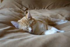 El dormir de Kitty Imagenes de archivo
