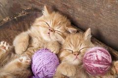 El dormir de los gatitos Fotografía de archivo