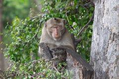 El dormir de los monos Imágenes de archivo libres de regalías