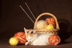 El dormir del gatito Imagen de archivo