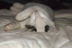 el dormir del gatito Fotografía de archivo libre de regalías