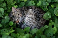 el dormir del gatito Foto de archivo libre de regalías