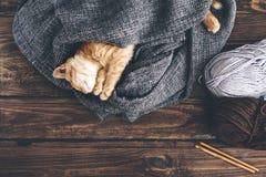 El dormir del gatito de Gigner Fotografía de archivo
