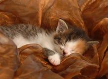 El dormir del gatito del bebé Fotos de archivo
