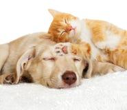 El dormir del gatito y del perrito Fotografía de archivo