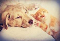 El dormir del gatito y del perrito Imagenes de archivo