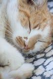 El dormir del gato Fotografía de archivo libre de regalías