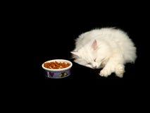 El dormir del gato del angora Fotografía de archivo