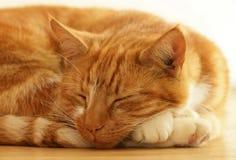 El dormir del gato del jengibre Imágenes de archivo libres de regalías