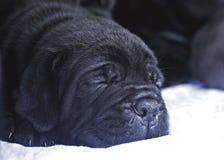 El dormir del perrito fotografía de archivo