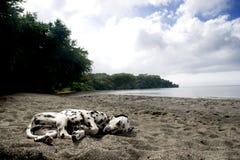 El dormir del perro de la playa foto de archivo libre de regalías