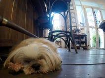 El dormir del perro del bebé Imagen de archivo