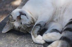 El dormir gris rayado del gato Foto de archivo libre de regalías