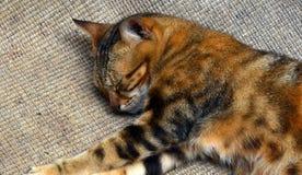 El dormir Kitty Imagen de archivo