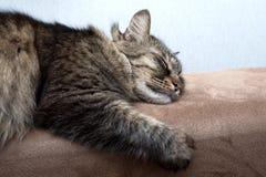 El dormir lindo del gato Imagenes de archivo
