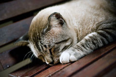 El dormir pacífico Fotos de archivo