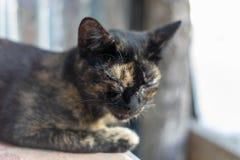 El dormir rayado negro y anaranjado del gato fotografía de archivo