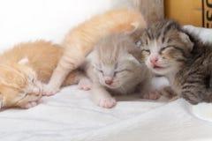 El dormir recién nacido de los gatitos en la alfombra blanca Foto de archivo libre de regalías