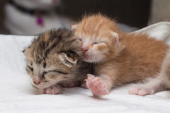 El dormir recién nacido de los gatitos preciosos Foto de archivo