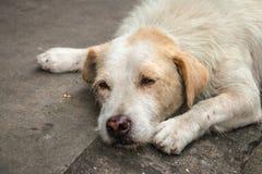El dormir sin hogar del perro Foto de archivo