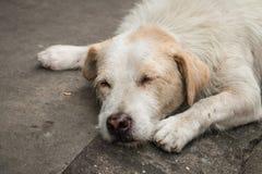 El dormir sin hogar del perro Fotografía de archivo