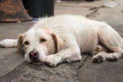 El dormir tailandés sin hogar del perro Fotografía de archivo