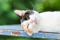 El dormir tricolor del gato Fotografía de archivo libre de regalías